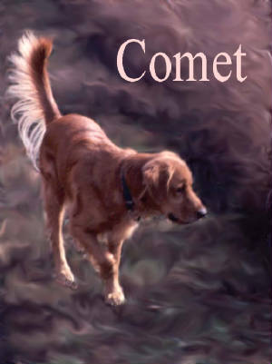 Comet (Golden Retriever)