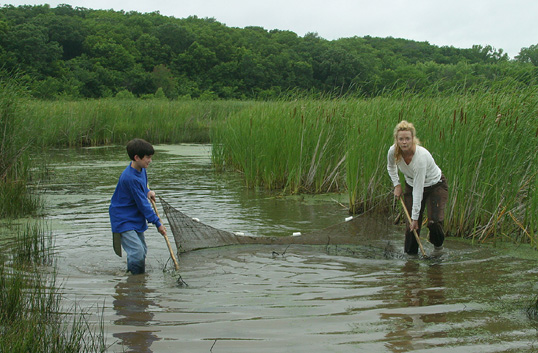 Camp Creek Wetlands seining photo