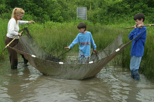 Seining at the wetlands