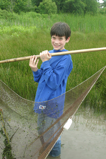 Seining the wetlands